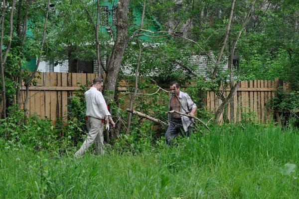Убока деревьев на площадке